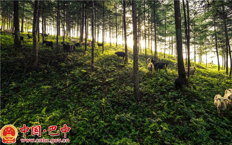 空山天盆国家AAAA级旅游景区.jpg