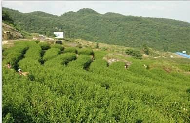 巴中市3个茶叶品牌荣获四川省最具发展潜力茶叶品牌