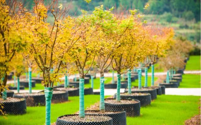 巴中:七彩林业被认定为国家林业标准化示范企业