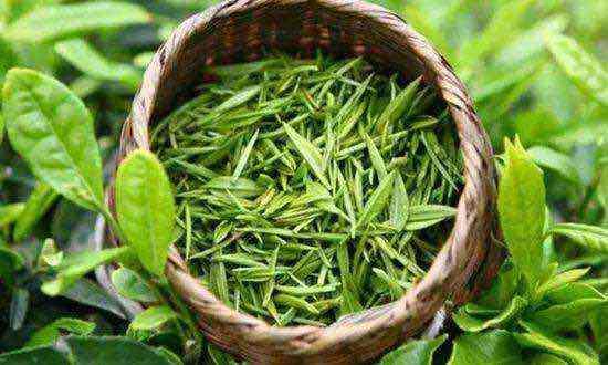 """南江县下两镇:念好""""五子诀""""  做强茶产业"""